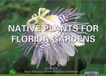 Native Plants For Florida Gardens