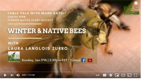 Winter and Native Bees